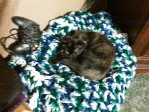 """Cleo says, """"I make you sleepy..."""""""