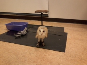 We saw this owl on Harry Potter night at the Science Center... where we nailed the trivia contest.