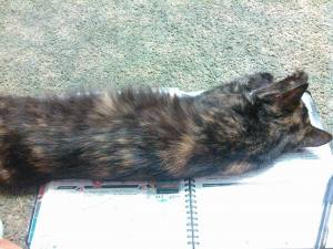 Cleo loves to journal. I wish she'd get back on the job and take care of the crickets in the basement instead.