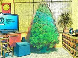 Bare Xmas Tree